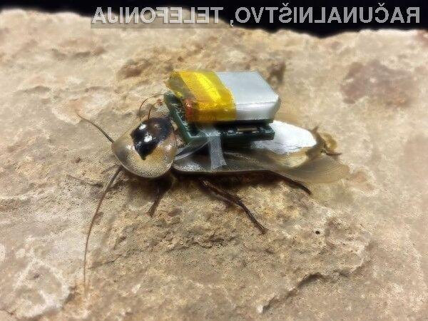 Oddaljeno vodeni ščurki bi bili kot nalašč za reševanje v naravnih nesrečah.