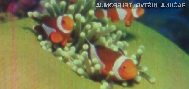 Površina slike tropske ribice znaša zgolj 0,0092 kvadratnih milimetrov.