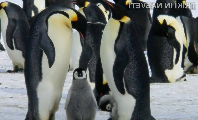 Za vsakega uporabnika se najde svoja distribucija Linuxa!
